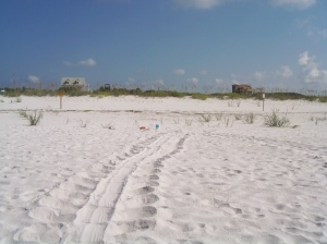 This is what turtle tracks would look like.