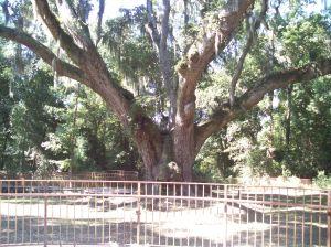 Jackson's Tree, Daphne AL
