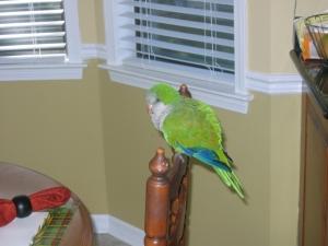 found pet bird