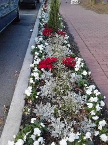 Fairhope Christmas street landscaping