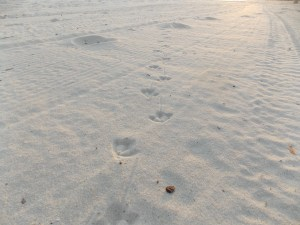 More Bird Tracks