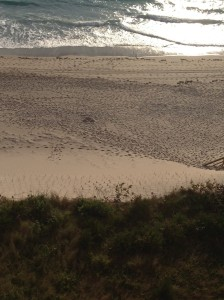 Turtle tracks to nesting area on the dune, left of center.  The dark spot in the center of the beach that looks like 3 triangles together, is a nest that was posted/staked the previous day.  There is another directly straight to the water from the dark spot.
