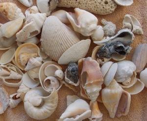 shells (c) eileensaunders