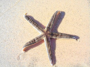 star-fish-_-st-george-island